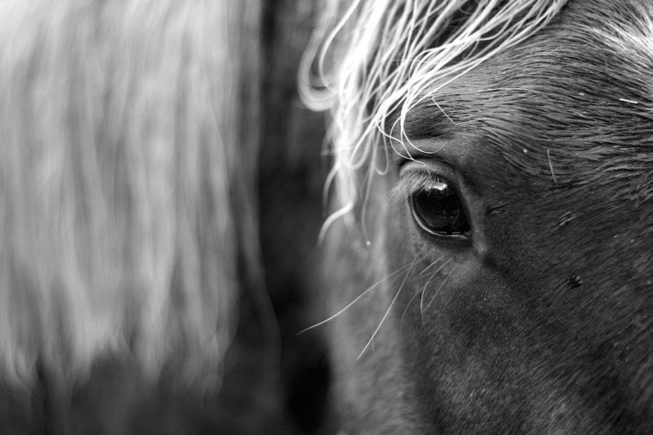 cheval tai chi cavalier
